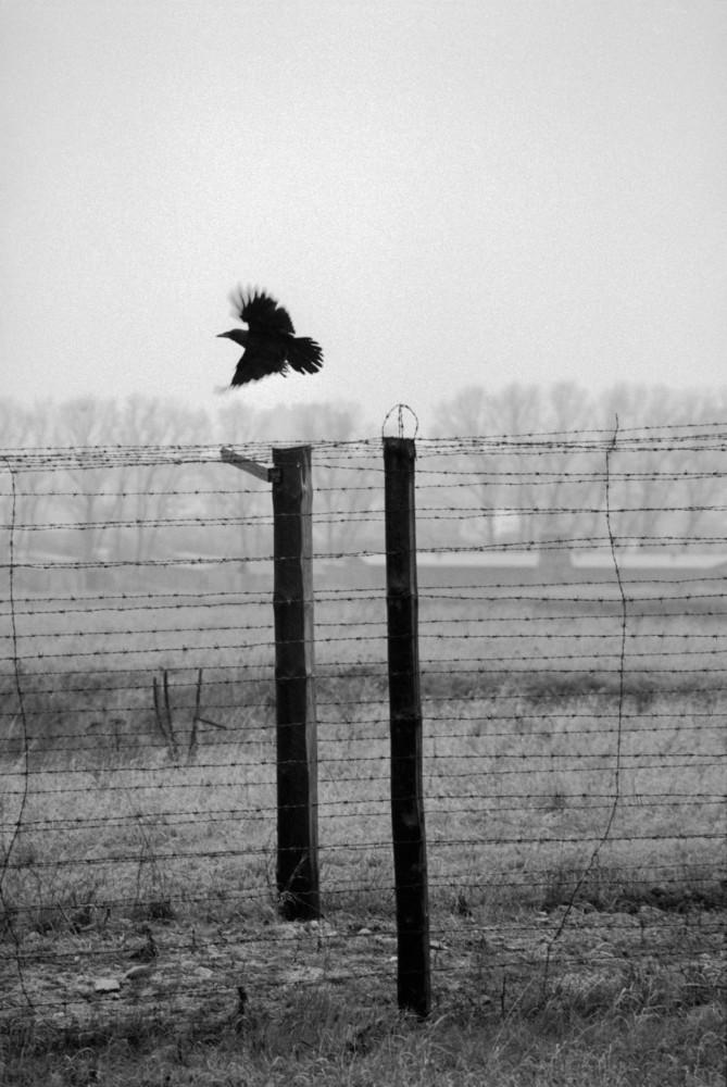 Polonia, Lublin, 1994. Alambrada que rodeaba el campo de concentración de Majdanek. Foto: Erich Hartmann (Magnum), en el libro 'In the camps'.