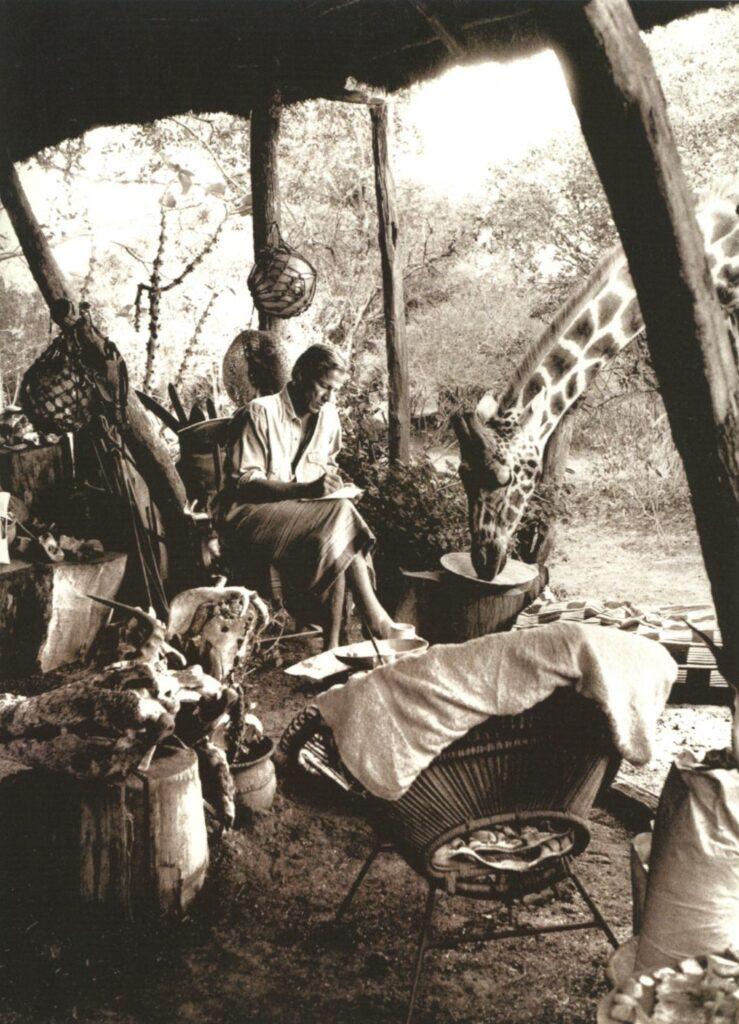 Foto del fotógrafo Peter Beard escribiendo en su casa de África mientras una jirafa bebe agua a su lado