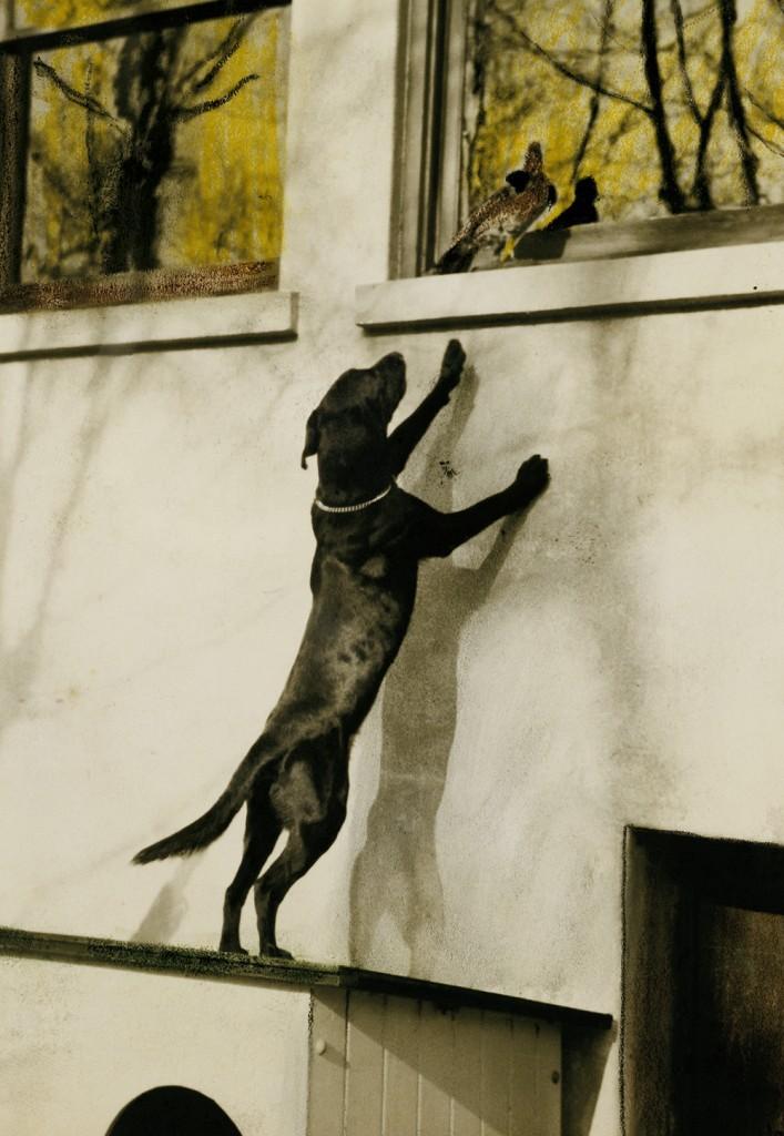 Foto de un perro intentando alcanzar un pájaro hecha por el fotógrafo Peter Beard cuando era niño