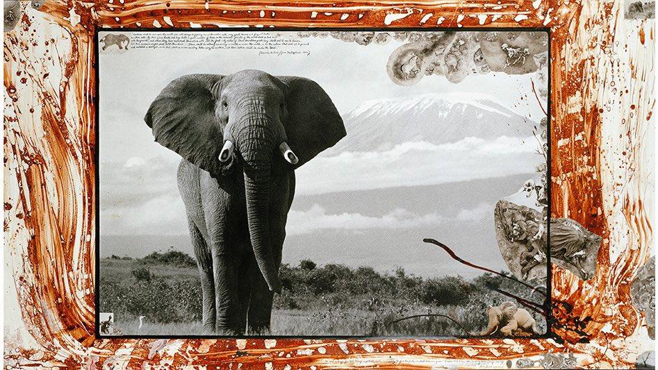 Elefante mirando a cámara. Foto de Peter Beard.