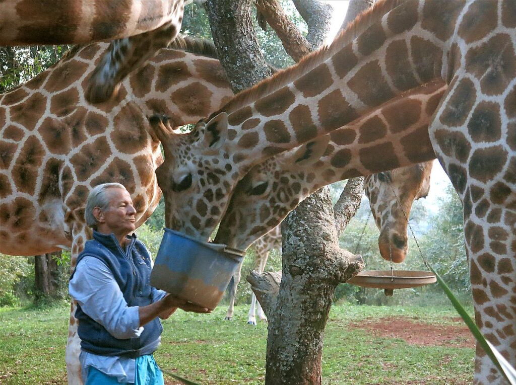 El fotógrafo Peter Beard dando agua a una jirafas en África