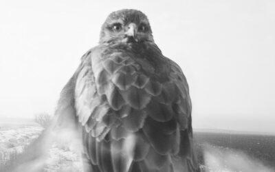 Y el intruso miró al ave: 'The Pillar', el original y controvertido fotolibro de Stephen Gill